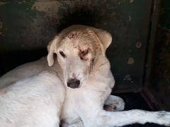 Altındağ Belediyesi'nin şefkatli eli, bir sokak köpeğini daha kurtardı