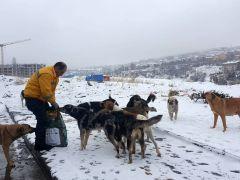 Çankaya Belediyesi, sokak hayvanlarını unutmadı